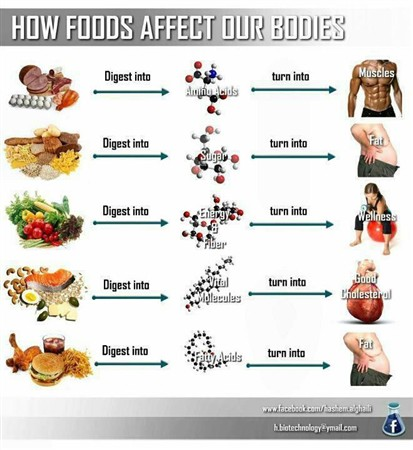 How-foods-effect-our-bodies